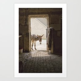 Cute Burro Looking Inside a Doorway Art Print