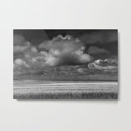 Black & White of a Canola Field by a Lake in Saskatchewan Metal Print