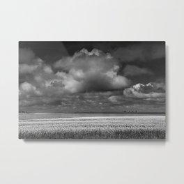 Black & White of a Canola Field by a Lake in Saskatchewan Metal Print