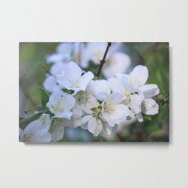 Hawthorne Flowers After Rain Metal Print