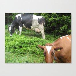 Cows 1 Canvas Print