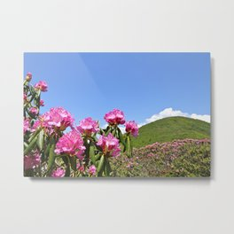 Spring Wildflowers, Pink Rhododendrons, Mountain Landscape Metal Print