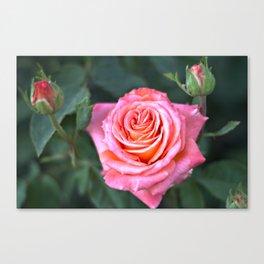 Fine Art Photography - Flowers - Botanical Art - Orange, Peach, Coral Rose Photograph Canvas Print
