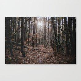 North Carolina Fall Canvas Print