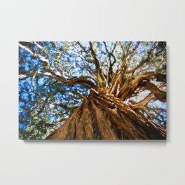 Looking Up A Tree Metal Print