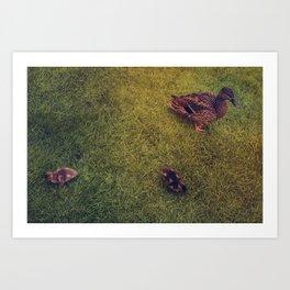 Canard Art Print
