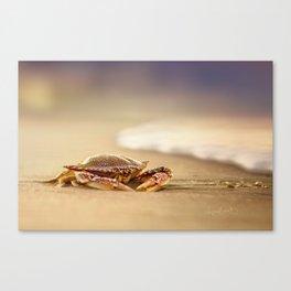Crab Cribrarius Canvas Print