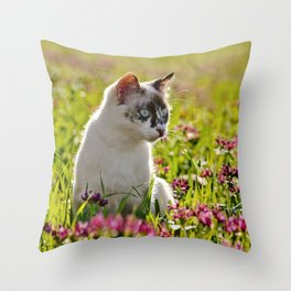 tortoiseshell cat in a meadow Throw Pillow