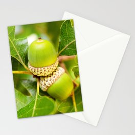 Two Acorns Nestled In A Tree Branch Stationery Cards