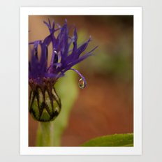 Early Morning Rain Drop Art Print