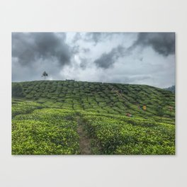 """Tea Plantation afternoon, after rain"" Cameron Highland Malaysia. Canvas Print"