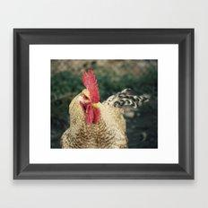 gallo Framed Art Print
