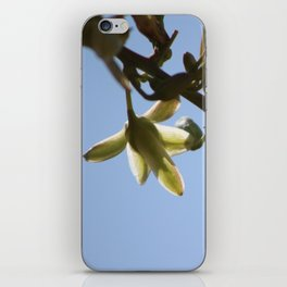 Closeup of  Hesperaloe Parviflora Flower at Sunnyland in Sun iPhone Skin