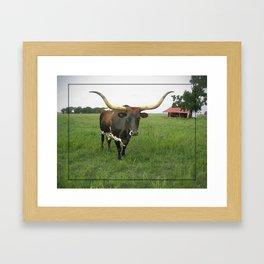 Texas Longhorn Framed Art Print