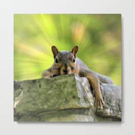 Relaxed Squirrel Metal Print