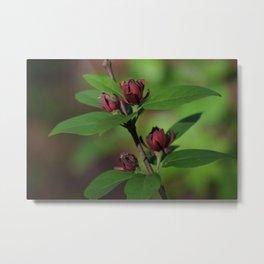 A Smoky Mountain Wildflower Metal Print