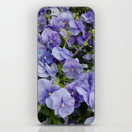 Pansy flower iPhone Skin