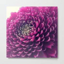 Purple Germini Closeup 1 Metal Print