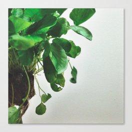 The Avant-Garden Forage || Watercress  Canvas Print