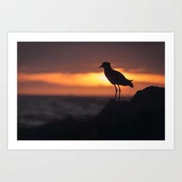 Shadow Bird Art Print