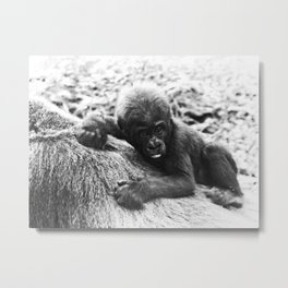 Baby Gorilla Riding Mother's Back Vintage Black and White Look Metal Print