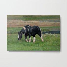 Gypsy Vanner Horse 0188 - Colorado Metal Print