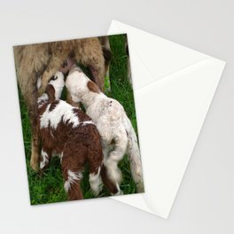 Twin Lambs Suckling From Their Mother Stationery Cards