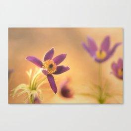 Fine Flower in Detail  Canvas Print