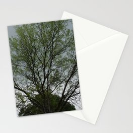 Texas Mesquite Tree Stationery Cards