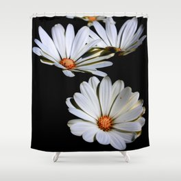 White African Daisies Isolated on Black Shower Curtain