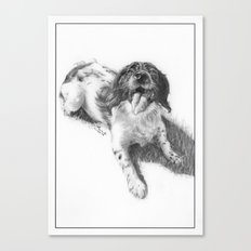 Pig the English Springer Spaniel Canvas Print