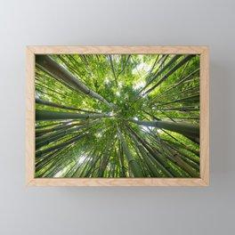 Looking Up A Bamboo Forest Canopy, Haleakala, Maui, Hawaii Framed Mini Art Print