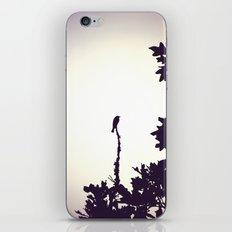 Music of the Night iPhone & iPod Skin