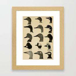 Vintage Duck Heads Framed Art Print