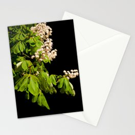 blooming Aesculus tree on black Stationery Cards