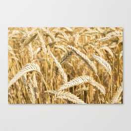 Farmers Best Canvas Print