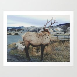Mammoth Elk Art Print