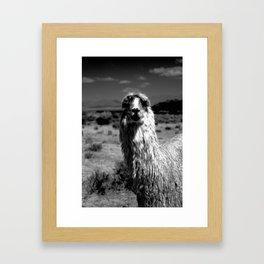 Peru Journey NO2 Framed Art Print