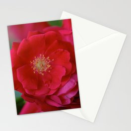 Red Bloom Stationery Cards