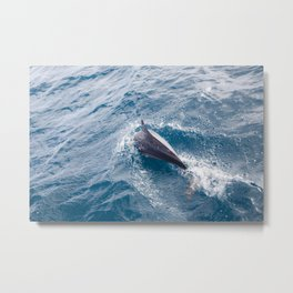 Dolphin in the ocean Metal Print