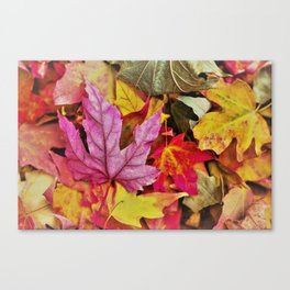 Autumn colorful leaves mountain Canvas Print