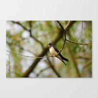 swallow Canvas Prints featuring Swallow by Ria Pi