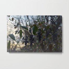 The Wild Thornberries Metal Print