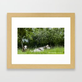2 cows in Normandy France Framed Art Print