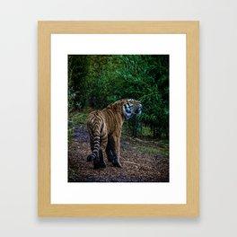 A Tigers Roar Framed Art Print