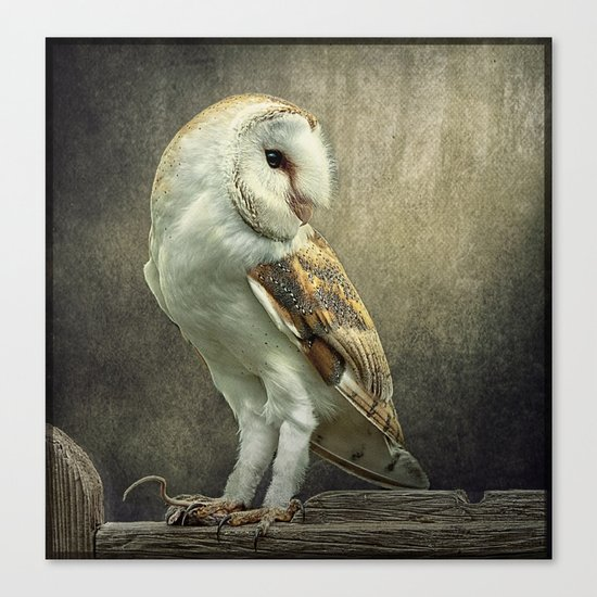 Barn Owl and Mouse Canvas Print