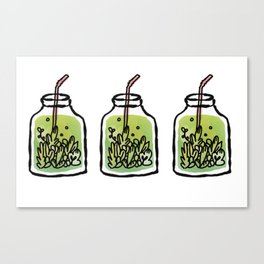 Mason Jars of Green Blooming Tea Canvas Print