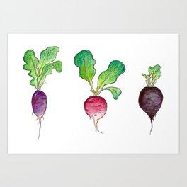 Radish Bunch Art Print