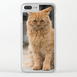 Wild ginger cat on Ogijima island in Japan Clear iPhone Case