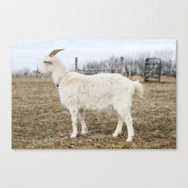 Tonka the Goat Canvas Print